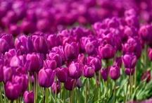Flowers ...I like it