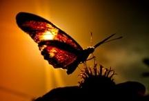 Butterfly`s ...vlinders