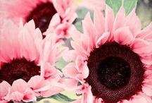Pink  (rose)