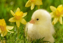 Spring.&Easter