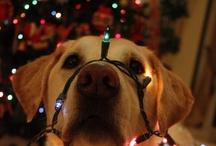christmas ....versiering