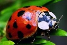 Ladybugs ***lieve heersbeestjes*** / die leuke kleine rode beestjes met zwarte stippen