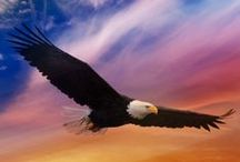 ANIMAL • Eagle