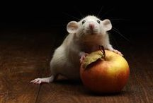 ANIMAL • Mouse