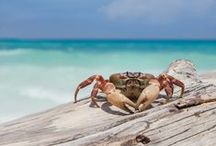 ANIMAL • Crab