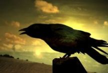 ANIMAL • Crow