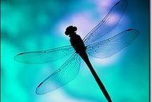 ANIMAL • Dragonfly