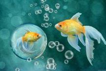 ANIMAL • Fish