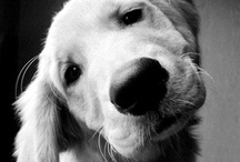 <3...dogs...<3