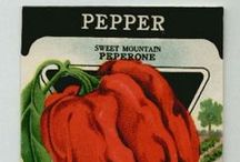 Vintage PRODUCE LABELS Rock / Fruit and labels labels from the past