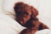 Paws / cute animals