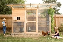 Chicken coop ideas !
