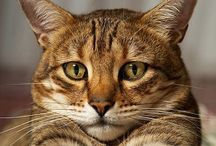 Cats...who knew? / I never knew cats could be so entertaining and captivating. I was always a dog person until a staving feral baby cat came around my door.... / by Sherry Marcy