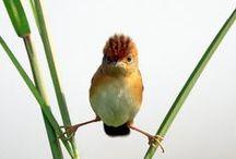 Tweetie Birds