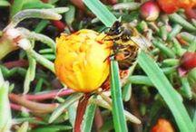 Semillas / Todo empieza con una semilla, germina, crece y da sus frutos... #Semillas de #hiloxhilo #modasostenible #modaslow #hiloxhilo www.hiloxhilo.com