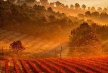 Naranja is Orange / Energía + Felicidad +Alegría +Entusiasmo + Creatividad + Animo = Color Naranja