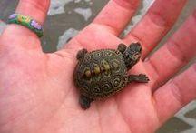 Tortugas / Turtles / Unos de mis animales favoritos... :-)
