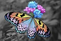 Butterflies / Butterflies are beautiful insects that are often seen as spiritual and mystical. They are often seen as symbols of change and transformation and are a positive sign. (If you'd like to add pins to this group board just follow us and then send us a message and we'll add you).