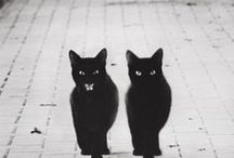 Black Cats / Black cats are often referred to in superstitions as well as being seen as magical, mysterious, and being a witch's familiar. (If you'd like to add pins to this group board just follow us and then send us a message and we'll add you).