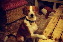 Dogs / Beauty Dog photos