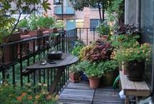 Plants/flowers/garden