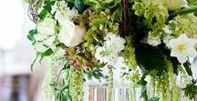 Amaranthus / Different varieties of fresh cut Amaranthus specifically grown for the wholesale flower trade. Also known as Love Lies Bleeding.