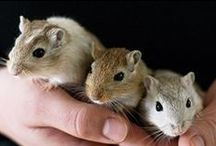 Pocket Pets / Info and stories about the care of small pets