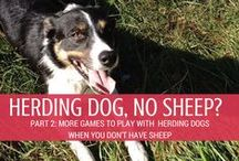 Training and Tricks / Tips for training your high-energy, highly intelligent herding breed.