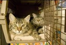 Tips for Transporting Cats / Easier ways to get your cat ti the vet!