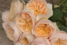Peach Wedding Flowers