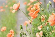 flowerspots