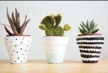 Jardinería / ideas & tendencias para jardín