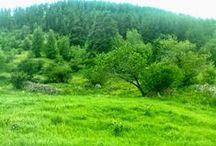 Gülveren köyü / Şenkaya / Şenkaya / Gülveren köyünden fotoğraf kareleri