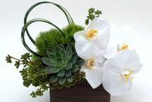 Succulent Flowers & Plants | NYC / https://www.gabrielawakeham.com Modern Flower Arrangements made with succulents.