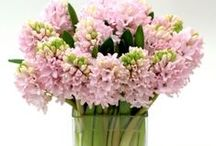 Great Get Well Flowers | NYC / https://www.gabrielawakeham.com Our premium designer get well flowers are a great way to cheer up a loved one or business collague who is recovering at home or in the hospital. We offer more than 75 luxury flower arrangements that are perfect to send as a get well gift no matter what a person`s taste or age. You can send roses, orchids, calla lilies, seasonal flowers like peonies, tulips, hyacinth and irises when available, and all delivered to NYC.