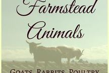 Farmstead Animals / Managing animals on a small scale farm - and making sure they all get along...