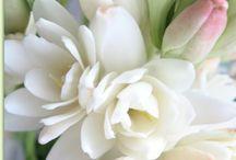 flowers / by kath neus