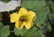 Dans notre jardin ✿ / Entre légumes bio, herbes folles et plantes à tisane ... découvrez notre jardin ! - Organic vegetables, wild grasses and herbal tea plants, discover our garden !