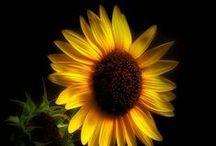 Flores e Decoração com flores... II