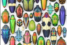 Insects and Mites