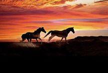 Horses ♥♥♥