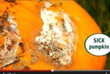 Plant Pathology Inspired Halloween