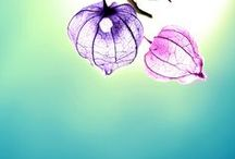 periwinkle and pink