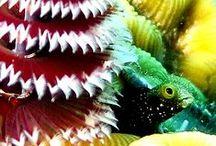 Foto Sub Macro / o fundo do mar tem encantos raros...