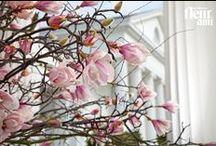 Hochzeitsdekoration · Wedding decoration / Impressionen und Anregungen für einen der schönsten Tage im Leben · Impressions and suggestions for the most important day of life  --- Weitere Produkte auf www.fleur-ami.com · Learn more about our assortment at www.fleur-ami.com