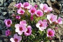 Linguaggio dei fiori / Nomi e significati