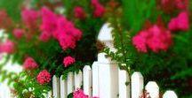 Clôtures ~ Fences