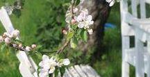 Nature // Printemps ~ Spring