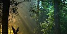 Nature // Forêts