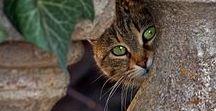 So chats ~ Sweet kitties